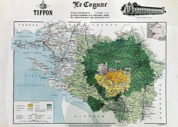 Tifon vigne